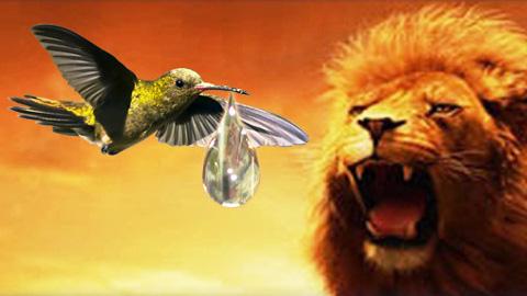 Il-colibri-e-il-leone-480